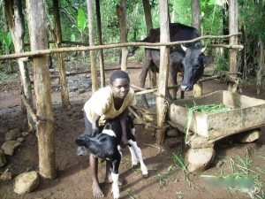 April 2012 - An orphaned child in home based care alongside one of the several little calves born this spring from the first 15 heifers in the project. Mama watches over closely, and is providing both with fresh milk daily.