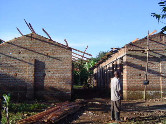 On to the roofing.. trusses were constructed and hoisted (.. not a power tool in sight.. but extreme proficiency and accuracy with machetes, splitting 2 x 8's into 2 x 4's..).. and then rafters were added for nailing iron sheets to..